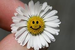 雏菊微笑 库存图片