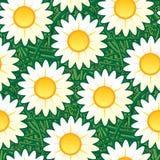 雏菊无缝的墙纸 库存照片