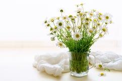 雏菊春黄菊在白色背景的玻璃瓶子开花 库存图片