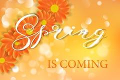 雏菊春黄菊gerber在橙色晴朗的夏天背景传染媒介例证开花 免版税库存图片