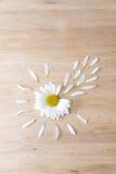 雏菊有瓣的头状花序 免版税库存照片
