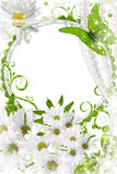雏菊框架照片 免版税图库摄影