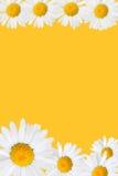 雏菊框架 免版税图库摄影