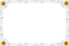 雏菊框架 库存图片