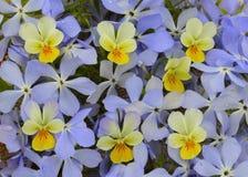 雏菊植物群瓣秀丽庭院雏菊绽放花春天花卉雏菊flowe的织品纹理新花束绿色样式领域 免版税库存照片
