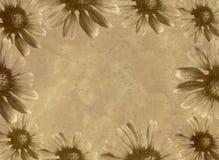 雏菊模板 库存图片