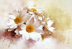 雏菊深度非常域短小白色 库存照片