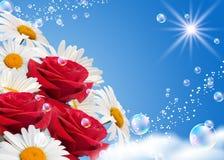 雏菊玫瑰 库存照片