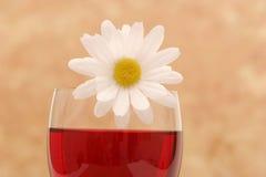 雏菊玻璃白葡萄酒 图库摄影