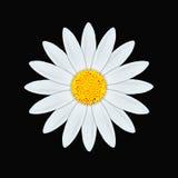 雏菊白色 向量例证