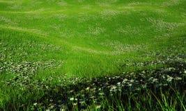 雏菊的多小山领域 库存图片
