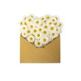 雏菊的心脏在信封的 免版税库存照片