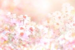 从雏菊的抽象软的甜桃红色花背景开花 库存图片