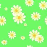 雏菊的无缝的样式 免版税库存照片