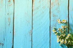 雏菊的顶视图图象在蓝色木桌上开花 被过滤的葡萄酒 库存照片