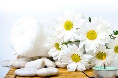 雏菊简单的白色 免版税图库摄影