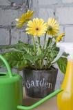 雏菊罐黄色 库存照片
