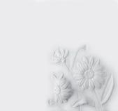 雏菊背景 图库摄影
