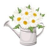 雏菊花束在喷壶的。传染媒介。 库存图片