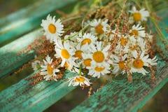 雏菊花束在树桩的 图库摄影