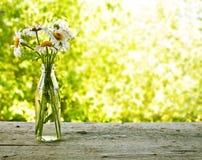 雏菊花束在瓶的 免版税库存图片