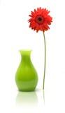 雏菊花瓶 库存图片