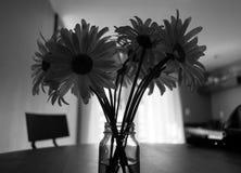 雏菊花瓶 免版税库存照片