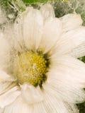 雏菊花的垂直的抽象 免版税库存照片