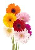 雏菊花被隔绝的大丁草花束 免版税库存照片