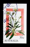 雏菊花,野花serie,大约1986年 免版税库存照片