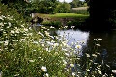雏菊装载在河旁边的 库存照片