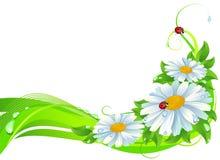 雏菊装饰 向量例证