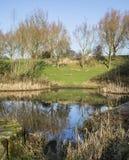 雏菊角落国家公园的池塘在冬天 库存图片