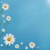 雏菊边界 库存照片