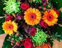 雏菊,下落,花,植物,宏观照片 库存照片