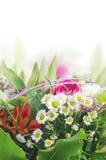 雏菊,百合,玫瑰色束,花卉边界,被隔绝 免版税库存图片
