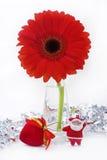 雏菊gerber红色花瓶 免版税库存照片