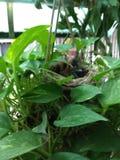 雏鸟 图库摄影
