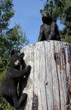 雕刻在北岛康复中心入口的黑熊木头, BC 免版税库存图片