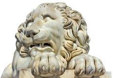 雕刻在白色隔绝的大理石顶头狮子 库存图片