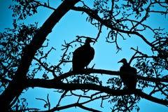 雕剪影在一棵树的在晚上 免版税库存图片