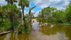 雕在大沼泽地国家公园 免版税库存图片