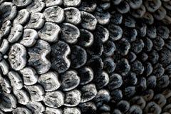 雕塑,鱼鳞石雕刻的雕塑纹理  免版税库存图片