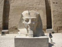 雕象卢克索神庙的(头)拉姆西斯2 免版税图库摄影