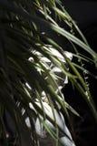 雕象的面孔被伪装在叶子之间 免版税库存图片