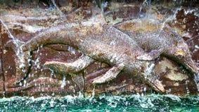 雕刻海豚 库存照片