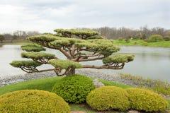雕刻的常青树在规则式园林里 免版税库存图片