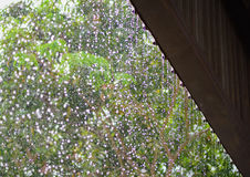 雨下落从有迷离绿色自然的屋顶连续地下跌 图库摄影