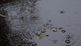 雨下降起波纹在水坑 叶子在水中 股票视频