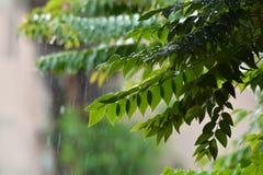 雨叶子 免版税库存照片